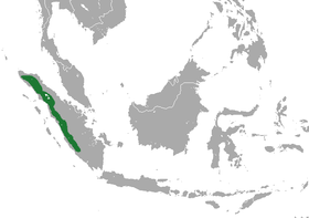 Sumatran Long-tailed Shrew area.png