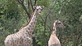 Sumu wildlife park01.jpg