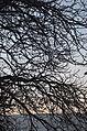 Sun and trees.JPG