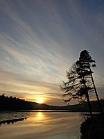 Sunset Trees Partially frozen Kirkleegreen reservoir. Scots pine and larch on the right.