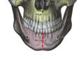 Symphysis menti (Gray190 edit).png