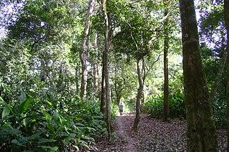 Isiboro Sécure National Park and Indigenous Territory - A man walks through the Isiboro Sécure park near the Sécure River