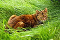 Tabby cat in the grass.jpeg