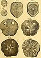 Tableau encyclopédique et méthodique des trois règnes de la nature (1791) (14745226406).jpg