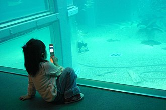 Japanese mobile phone culture - A young girl taking photos with her phone at the Osaka Aquarium