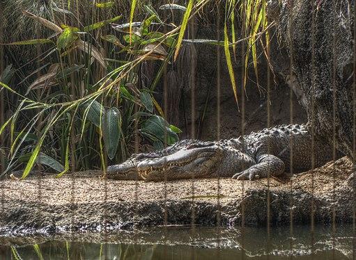 Taronga Zoo (6181912753)