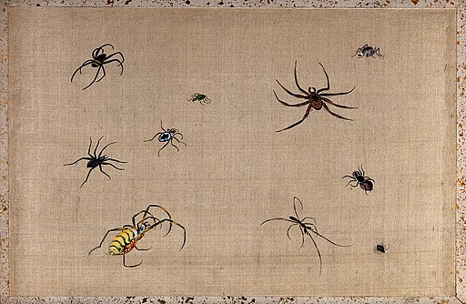 Ten spiders, showing much variation in shape and colour. Gou Wellcome V0043845