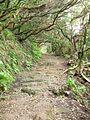Teneriffa - Nordost - Wanderung durch den Lorbeerwald am Cruz de la Carmen - panoramio.jpg