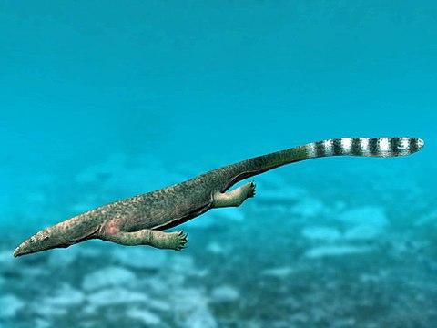 Thalattosaur does what thalattosaurs do
