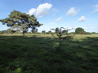 The Brinks, Northwold - Image: The Brinks, Northwold 4