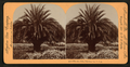 The Date Palm, Pasadena, Cal., U.S.A, by Singley, B. L. (Benjamin Lloyd).png