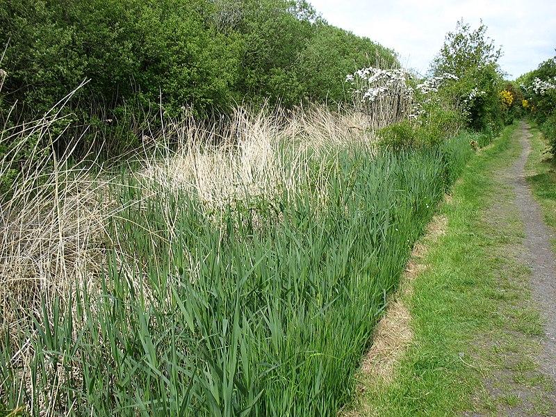 File:The Hadrian's Wall Path nearing Port Carlisle - geograph.org.uk - 3492568.jpg