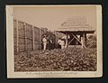 The National Archives UK - CO 1069-453-05 - Customs Outpost on the present Boundary.jpg