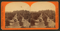The Orange grove, from Robert N. Dennis collection of stereoscopic views.png