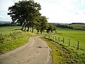 The Road from Carrot - geograph.org.uk - 979411.jpg