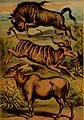 The animal kingdom; based upon the writings of the eminent naturalists, Audubon, Wallace, Brehm, Wood and others (1897) (18170506716).jpg