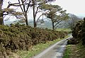 The lane to Llanycrwys, Carmarthenshire - geograph.org.uk - 1217295.jpg