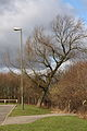 The leaning tree. (3300743852).jpg