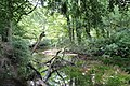 The meandering River Bollin (geograph 2579190).jpg