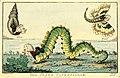 The state caterpillar. (BM 1868,0808.6464).jpg