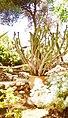 Thorny yet Beautiful cactus.jpg