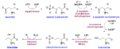 Threonine biosynthesis.png