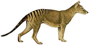 Thylacine - 80 px