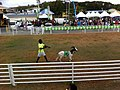 TnT Tobago Goat Race 2.jpg