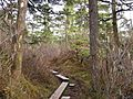 Tongass National Forest 103.jpg