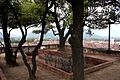 Top of Torre Guinigi (Lucca) - Tuscany, Italy.jpg