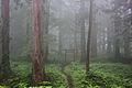 Torii in the mist v2.jpg