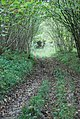 Track into Fontmell Wood - geograph.org.uk - 588782.jpg
