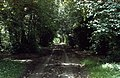 Track leading to Mawley Hall - geograph.org.uk - 107914.jpg