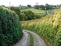 Track to Haydon Farm, North Tamerton - geograph.org.uk - 1005051.jpg