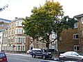 Tree, Plender Street - geograph.org.uk - 1561174.jpg