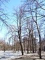 Trees in Memorial park 03.JPG
