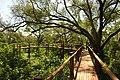 TreetopWalk.jpg