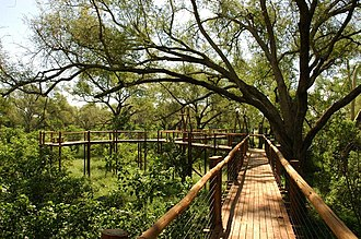 Kingdom of Mapungubwe - Image: Treetop Walk