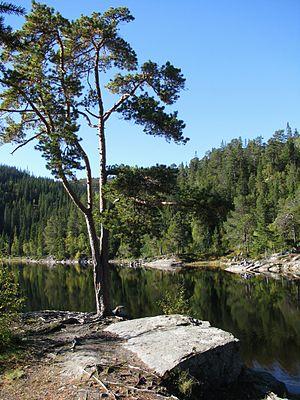Bymarka - Autumn near a lake in Bymarka