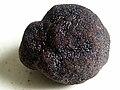 Truffe noire du Périgord.jpg