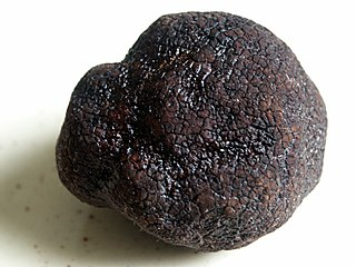 Truffle the culinary ingredient, use Q7850807 for the genus Tuber