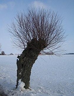 Tygelsj-Vstra Klagstorps frsamling Wikipedia