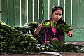 USAID Measuring Impact Conservation Enterprise Retrospective (Guatemala; Rainforest Alliance) (39593045054).jpg