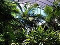 Umbracle del Jardí Botànic de de València.JPG