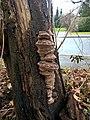 Unknown Mushroom (02).jpg