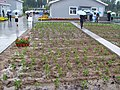 Urban agriculture at Erdos Eco-city (3009777019).jpg