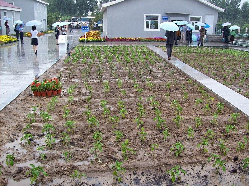 File:Urban agriculture at Erdos Eco-city (3009777019).jpg