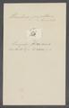 Urceolaris papillaris - - Print - Iconographia Zoologica - Special Collections University of Amsterdam - UBAINV0274 113 21 0016.tif