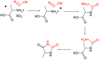 File:UrechHydantoinReaction.png - Wikimedia Commons