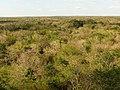 Uxmal Forest (16122915424).jpg